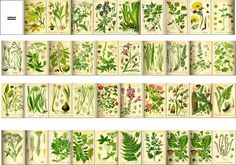 ♥.·:*¨¨*:·. Herbology Book-saved from here and printed  out 2 per sheet....perfect sized for Faerie books. .·:*¨¨*:·.