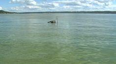 #AHS issues blue-green algae alert for Severn Creek Reservoir - CTV News: CTV News AHS issues blue-green algae alert for Severn Creek…