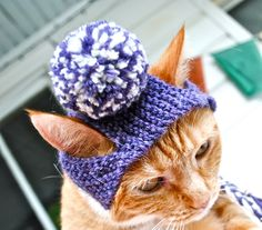 What cat doesn't need a pom pom hat?