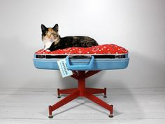 Suitcase Pet Bed with Pedestal Base