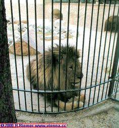 zoo alternatives   Save the Kales!