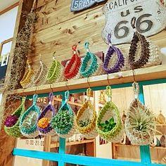 Lounge/雑貨/ハンドメイド/DIY/セリア/フェイクグリーン...などのインテリア実例 - 2016-10-22 23:37:33 Crochet Cactus, Crochet Mandala Pattern, Crochet Patterns, Crochet Home, Knit Crochet, Crochet Plant Hanger, Creative Textiles, Crochet Decoration, Unique Crochet