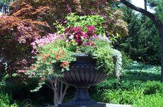 black urn planter  http://home.comcast.net/~jonesb1/cjlandscapes/images/cont1.jpg