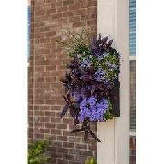 Bright Green Living Wall Planter Kit U0026 Reviews   Wayfair