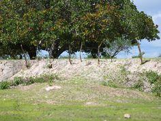 Fenômeno da desertificação está deixando áreas do Sertão alagoano com solo arenoso (Foto: Jonathan Lins/G1)