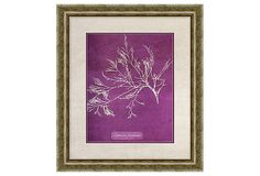 Purple Coral Print I on OneKingsLane.com