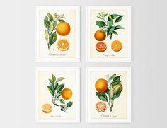 Hops Plant, Wall Art Prints, Fine Art Prints, Herb Wall, Botanical Wall Art, International Paper Sizes, Etsy App, Tree Art, Poster Wall