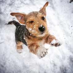 Jack Russell trying to make it through the last of winter!