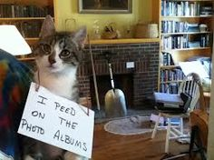 The Best of Cat Shaming - Part 11 pics) - FB Troublemakers Bad Cats, Bad Kitty, Kitty Cats, Funny Animals, Cute Animals, Cat Shaming, Animal Antics, I Love Cats, Good Things