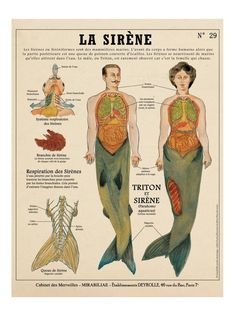 The siren / Mermaid print – cabinet of curiosities by the artist Camille Renversade Deyrolle poster – Education Mythological Creatures, Fantasy Creatures, Mythical Creatures, Siren Mermaid, Mermaid Art, Mermaid Poster, Cover Design, Minecraft Banner Designs, Cabinet Of Curiosities