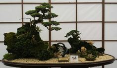 Love this!  #bonsai #Wow