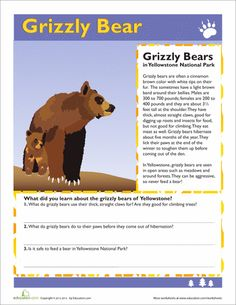 Worksheets: Grizzly Bear