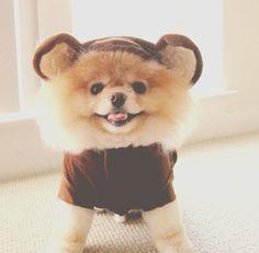 Rillakuma Puppy #cute #puppy #rillakuma #outfit