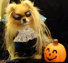 Maurene: My Pomeranian, Duff, looks a lot like David Bowie from the movie Labyrinth so I decided to help him along. I added some sparkle to a black dog jacket, made...