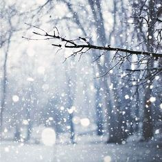 Shared by Find images and videos about white, nature and winter on We Heart It - the app to get lost in what you love. Winter Snow, Winter Christmas, Winter Blue, Winter Magic, Merry Christmas, Fragrance Mist, Perfume Fragrance, Snow Photography, Winter Nature Photography