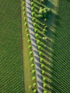 aerial photo of trees and fields creating amazing pattern