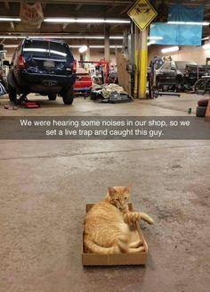 Universal cat trap