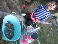 Planting ranunculus