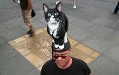 Cat on head.