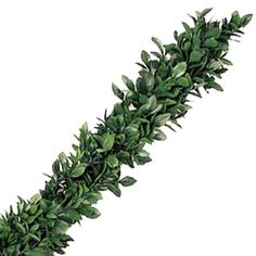 Ruscus Greens Garlands are the perfect DIY decoration! They are ideal for homes, churches, alters, tables, banisters, and much more. Use them alone, add fresh flowers, or light strings! Garlands are shipped fresh and direct and FedEx shipping is included in the price! Order yours today to bring a...