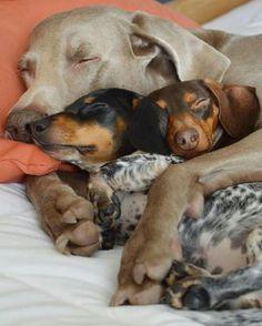 Lazy Sunday!