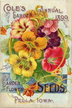 Cole's 1899 Flower Seed Catalog ~ Counted Cross Stitch Pattern #StoneyKnobFarmHeirlooms #CountedCrossStitch
