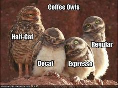 The Coffee Bird Family: Half-Caf, Decaf,  Espresso, and Regular. It's all about COFFEE!