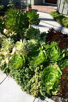 succulent garden inspiration. This would work great next to the house.