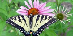 Choose a variety of flowers and flowering plants that are native to your region as local pollinators are particularly adapted to these. If you are unsure what options are best, consult with a local gardener or nursery.