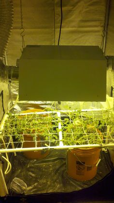 36 Best Tomato Grow Lights Images In 2019 Grow Lights