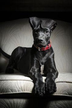 <3 Black Dog, Red Accessories <3
