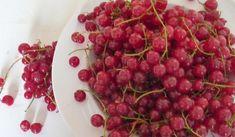 Jak udělat rybízový džem snadno, rychle a bez chemie Vegetables, Fruit, Food, Chemistry, Garden, Syrup, Garten, Essen, Lawn And Garden