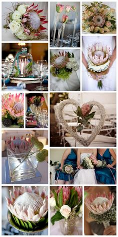 South African Proteas in all their glory for bold wedding bouquets. The Blushing Bride Protea is another small protea flower worth considering for your wedding. Protea Bouquet, Protea Flower, Protea Wedding, Tulip Wedding, Flower Bouquet Wedding, Church Wedding Flowers, Wedding Flower Decorations, Wedding Flower Arrangements, Wedding Bouquets