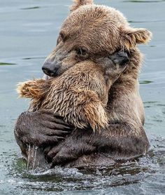 It's all love in the Animal Kingdom💙 Photo by © Nature Animals, Animals And Pets, Wild Animals, Wildlife Nature, Beautiful Creatures, Animals Beautiful, Beautiful Beautiful, Cute Baby Animals, Funny Animals
