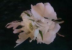 Sandra's Flower Studio