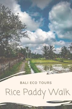 Bali Eco Tours gives the best rice paddy tour in all of Ubud, Bali. Ethical, community based and educational, this is green travel at its best. Travel Sights, Travel Destinations, Travel Tips, Rice Paddy, Sustainable Tourism, Bali Travel, Amazing Adventures, Ubud, Culture Travel