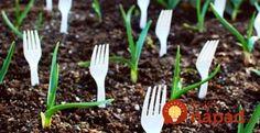 Zapichnite plastový príbor do pôdy v záhrade: O tomto triku ste možno ešte nepočuli, no môže vám zachrániť úrodu!