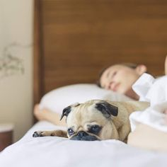 Tips for finding the best dog friendly accommodation for your pooch in the UK. Make sure you do plenty of research and check out any extra charges. Dog Friendly Accommodation, Holiday Accommodation, Carlin, Uk Holidays, Going On Holiday, Sleep Deprivation, Freundlich, Dog Friends, How To Fall Asleep