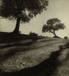 Max Dupain (Australian, 1911 – Bawley Point landscape 1938 Gelatin silver photograph 29 x cm National Gallery of Australia, Canberra Purchased 1982 Vintage Photography, Film Photography, Landscape Photography, Photography Ideas, Old Pictures, Old Photos, Black And White Landscape, Photo D Art, Shadow Play