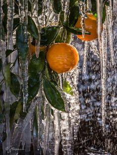 Freezing temps in Redlands CA January 13, 2013!! Photo Credit: Alex Mathews-Woodcock