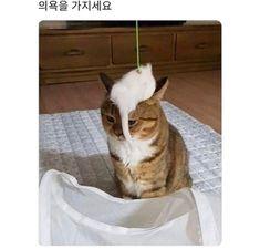 Russian Cat, Cute Cat Memes, Funny Cute, Funny Pictures, Cute Animals, Creatures, Pets, Cat Breeds, Humor