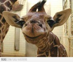 Imgur giraffe dating divas