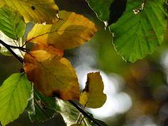 Herbst auf Rügen und ein Aquarell vom Jagdschloss Granitz   Bunte Blätter im Herbst (c) FRank Koebsch