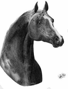 Arabian horse  #drawing #art #prismacolor #pencil #artwork #pencildrawing  #horse #arabian #equine