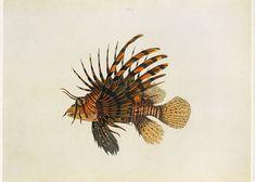 Vintage Book Plate Fish Buy 5 get 1 FREE by GalleryBotanica, $10.00