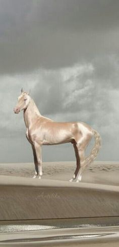 """says """"Akhal-Teke. The Akhal-Teke is a horse breed from Turkmenistan. Only about are left worldwide. Known for their speed and famous for the natural metallic shimmer of their coats. Most Beautiful Horses, All The Pretty Horses, Simply Beautiful, Beautiful Creatures, Animals Beautiful, Animals And Pets, Cute Animals, Akhal Teke Horses, Majestic Horse"""