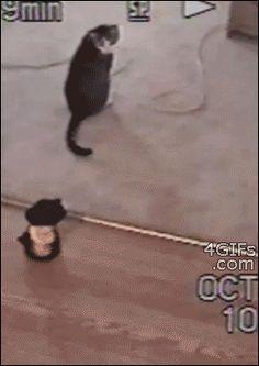 image from http://i.imgur.com/EaTPS1v.gif