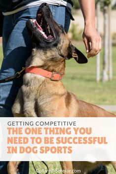 The one thing you need to be successful in dog sports