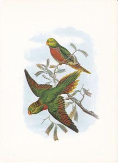 Vintage Bird Print John Gould Lory by FairlyVintagePrints on Etsy