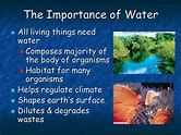 Image result for importance of water Importance Of Water, Beef, Image, Food, Meat, Essen, Meals, Yemek, Eten